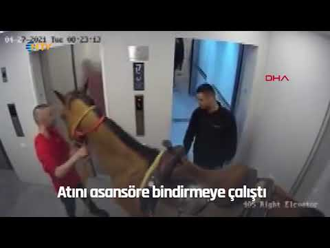NTV   Asansöre at bindirmeye çalışan 2 kişiye gözaltı