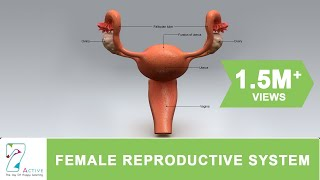Anatomy of human female reproductive system ppt human diagram chart.