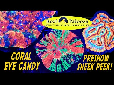 REEFAPALOOZA 2017 EARLY PREVIEW!