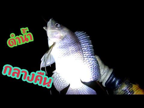 ดำน้ำยิงปลากลางคืน