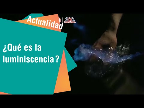¿Qué es el fenómeno natural bioluminiscencia | Actualidad
