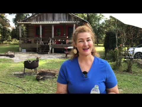 How to Use Diatomaceous Earth for Roaches and Bed Bugs