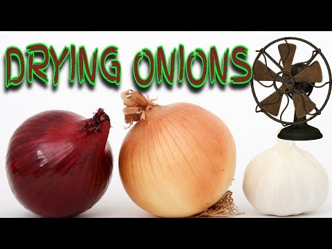 🌞HOW TO DRY ONIONS FOR STORAGE ⌛DRYING RACK HACK 👍MAKE ONIONS LAST LONGER! ⏰