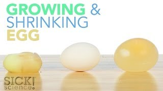 Growing and Shrinking Egg - Sick Science! #192