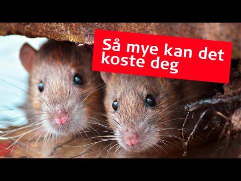 Rotter kan dukke opp i boligen din helt tilfeldig