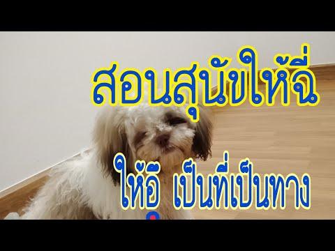 สอนสุนัขให้ฉี่-ให้ขี้ใส่ถาด-ง่