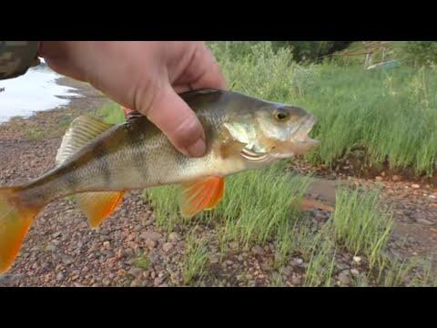 За 2 часа ВЕДРО РЫБЫ и домой / Рыбалка на отводной поводок / Эта резина понравилась рыбе