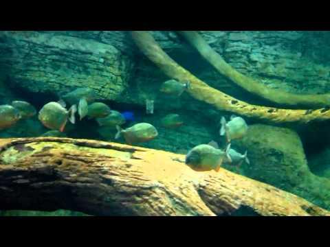 aquarium fish varieties