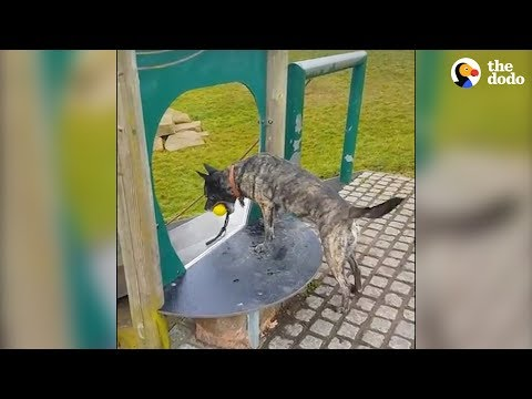 Very Smart Doggo Knows How To Entertain Himself | The Dodo