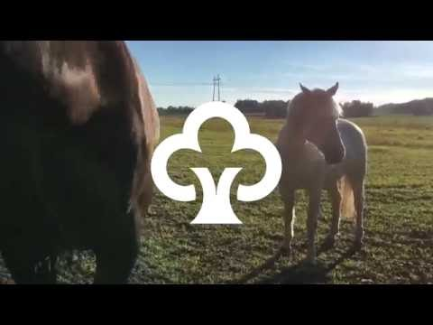 Hevosunelmia ja unelmahevosia – Näin toteutui elämänmittainen unelma hevosesta   Säästöpankkiryhmä