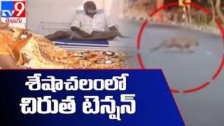 తరచూ జనావాసాల్లోకి వస్తున్న చిరుత పులులు - TV9 Ground report - TV9 - TV9