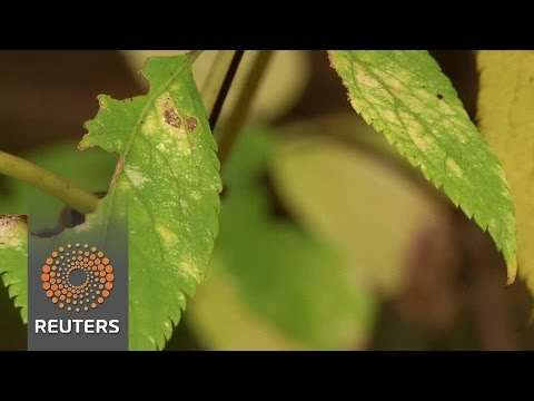 Finnish scientists turn over a new leaf