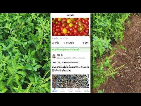 Kaset-Go-แอปที่คนทำเกษตรต้องมี
