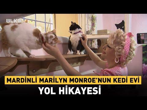 Mardinli Marilyn Monroe'nun Kedi Evi