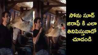 Actor Sonu Sood Feeding Camel | Real Hero Sonu Sood | Funny Videos | Rajshri Telugu - RAJSHRITELUGU