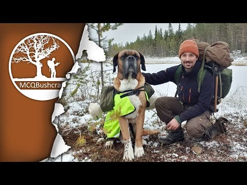 Early Winter Overnight Camping with my Dog in the Wilderness