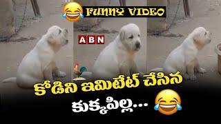 Funny Video: Cute Puppy Bark Like A Chicken Sound || ABN Telugu - ABNTELUGUTV