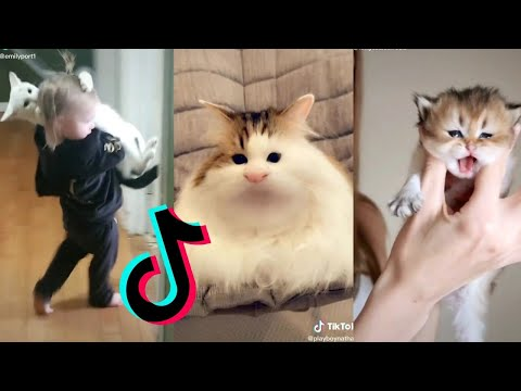 Cats being..CATS😼~Tiktok Compilation! Part 8 | Best Funny Cat TikTok Videos 2020 by Catsbook