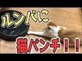 初めてルンバを見た猫たちの反応がおもしろすぎる!www