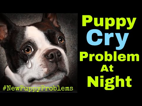 New Puppy Cry Problem at Night |Things to keep in mind after bring puppy at home | with Subtitles