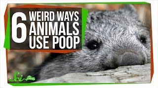 Fecal Shields, and 5 Other Ways Animals Use Poop