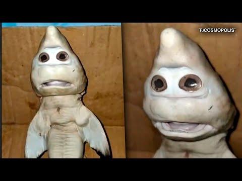 Qué es REALMENTE el BABY SHARK que han ENCONTRADO?