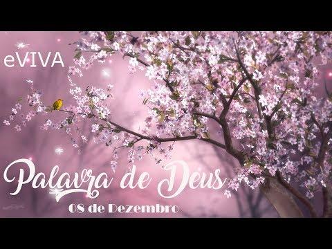 PALAVRA DE DEUS PARA HOJE 08 DE DEZEMBRO eVIVA MENSAGEM MOTIVACIONAL PARA REFLEXÃO DE VIDA