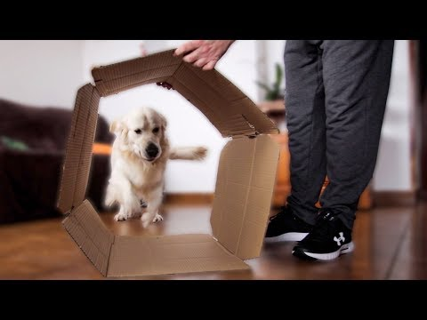A Great Idea to Play with My Dog - Using the Box Like a Tunnel
