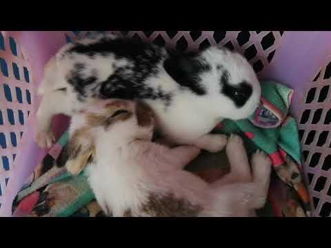 ดูลูกกระต่ายน้อยเคลิ้มหลับเคลิ