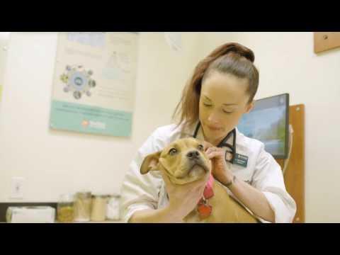Meet Dr. Nikki Wright - Banfield Pet Hospital Careers