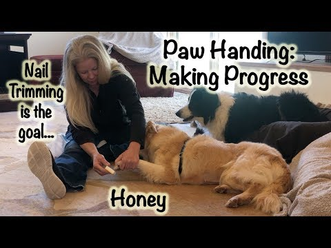 Paw Handling - Making Progress with Honey