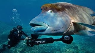 Google Streetview Underwater! (GREAT BARRIER REEF) - Smarter Every Day 114