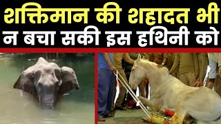 Elephant Death in Kerala : मल्लपुरम में हथिनी की हत्या ने उत्तराखंड के शक्तिमान की याद दिलाई - ITVNEWSINDIA