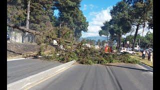 Fuerte viento derribó un árbol en Quetzaltenango