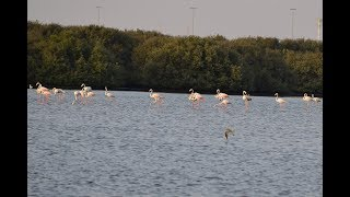 Travel View Wetland Birds Al Zorah Nature Reserve - Ajman UAE