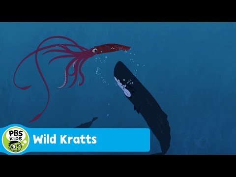Pics For > Colossal Squid Vs Great White Shark