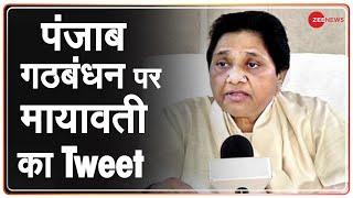 Breaking News: पंजाब में अकाली दल और BSP के बीच गठबंधन | Alliance between Akali Dal and BSP | Punjab - ZEENEWS