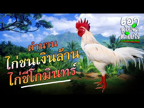 EP.10-ตำนานไก่เงินล้าน-ไก่ชีโก