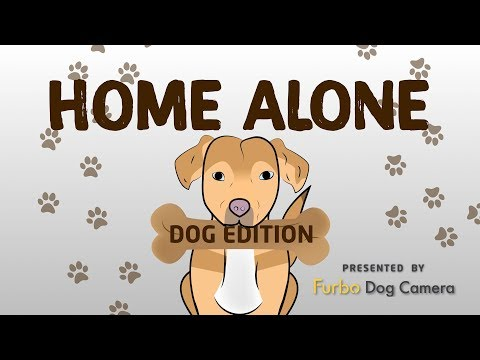 connectYoutube - Home Alone: Dog Edition