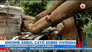 Enorme árbol cayó sobre vivienda en Puntarenas