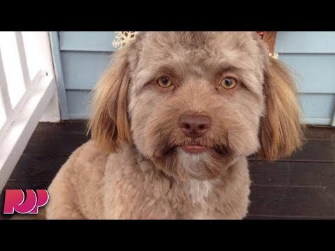 connectYoutube - This Dog Has A Human Face And The Internet CAN'T HANDLE