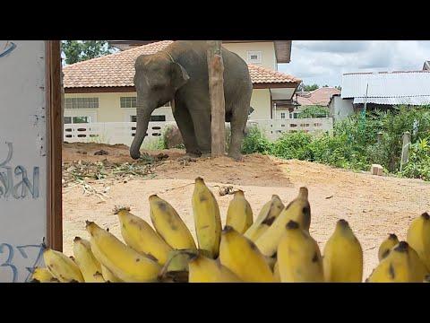 ออมสิน-โตโต้-พร้อมกินกล้วยหวาน