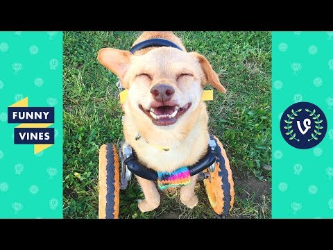 TRY NOT TO AWW! FUNNY and CUTE ANIMALS Videos Compilation 2018 | Funny Vine