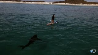 Paddling with Sharks