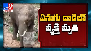 Watchman killed by elephant in Valparai    One Minute Full News - TV9 - TV9