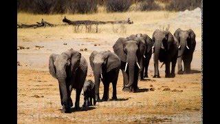 Self Drive Safari in Zimbabwe