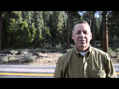 Blackwing - Responsible, Sustainable Forestry - Collins Almanor Forest