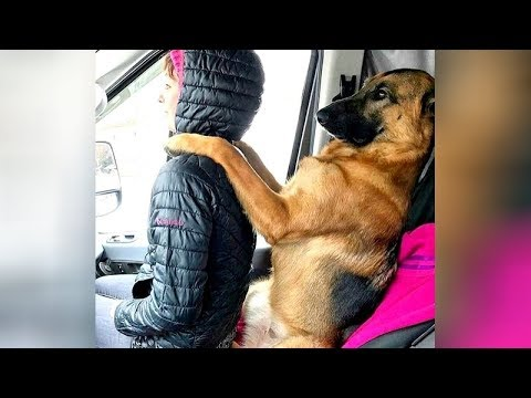 connectYoutube - You'll GET SIX PACK from LAUGHING SO MUCH - Funny ANIMAL VIDEOS compilation