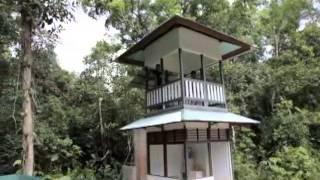 Video Gallery The Orangutan Project