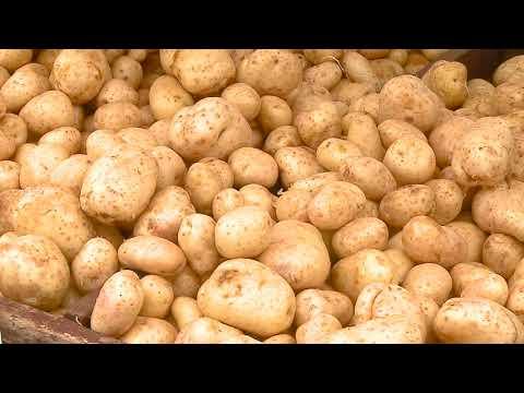 Los productores de la Feria del Agricultor temen perder su producción